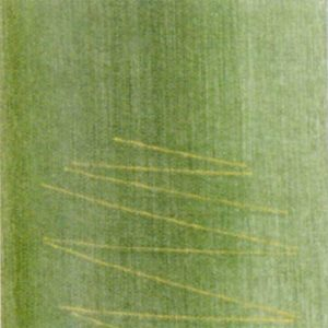 completo-copripiumino-open-space-di-gabel-verde