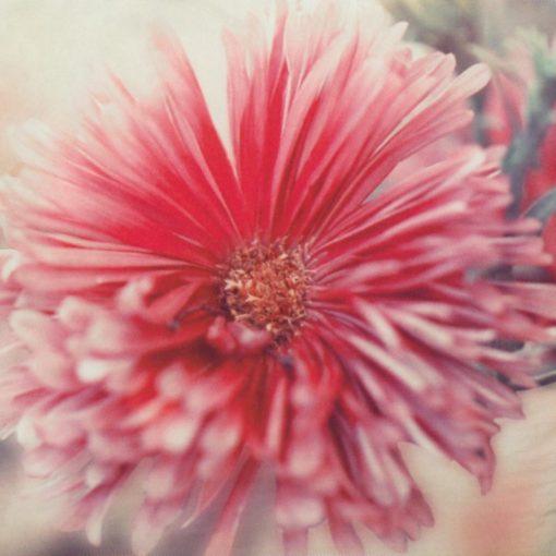 Particolare Flower