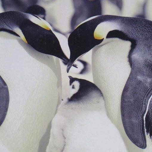 Plaid Morbidotto Pinguini Daunex con un lato agnellato che offre un buon punto di calore che raffigura una simpatica famiglia di pinguini (particolare)