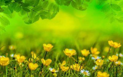Dolci sogni di Primavera con biancheriaok per la tua casa